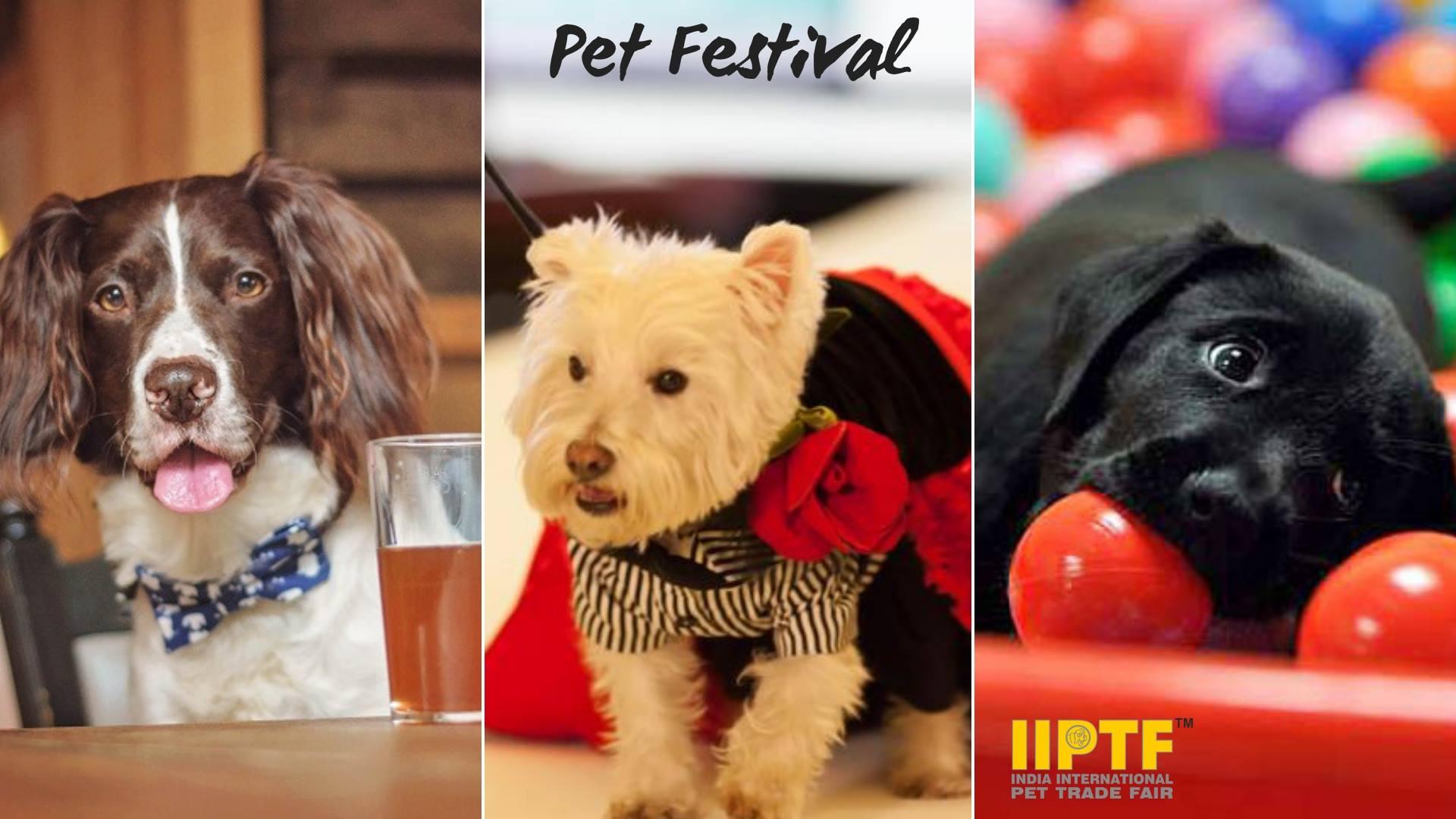 IIPTF : Pet Festival 2018